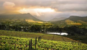 wine farms cape town