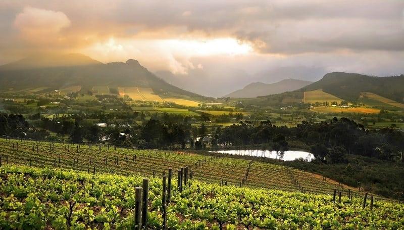 wine farms cape town